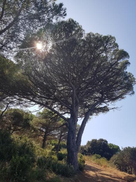 aaibaar, spelend met de zon